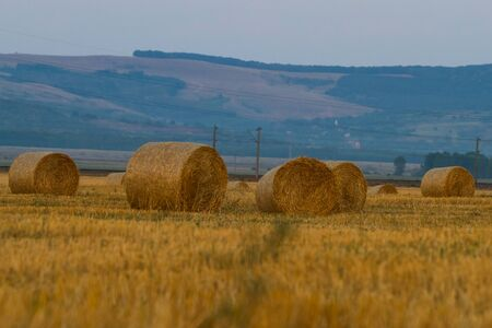 Bales of wheat straws, at the end of the summer  photo