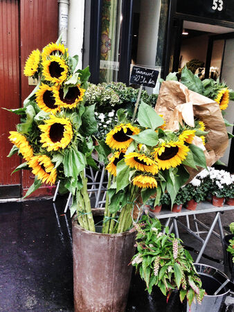 Sunflowers for sale in flower shop in Paris on rainy day photo