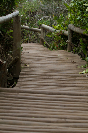 cordillera: Bosque de Fray Jorge national park  Bosque Fray Jorge national park  Parque Nacional Bosque Fray Jorge , UNESCO Biosphere reserve in the Limari Province, Coquimbo Region, Chile