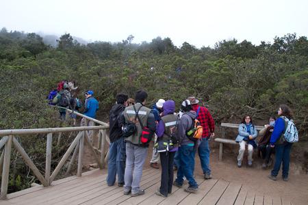 cordillera: Bosque de Fray Jorge national park  Bosque Fray Jorge national park  Parque Nacional Bosque Fray Jorge , UNESCO Biosphere reserve in the Limari� Province, Coquimbo Region, Chile Editorial