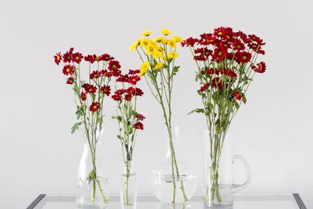 centres: Bunch of red and yellow chrysanthemum flowers with yellow centres in transparent glass vases over light grey background Stock Photo