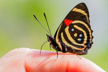 Close-up of colorful butterfly