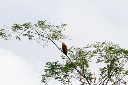 Birds in a lagoon on Rio Negro in the Amazon River basin, Brazil, South America