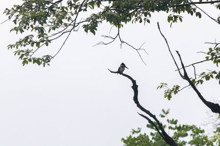 wildlife preserve: Birds in a lagoon on Rio Negro in the Amazon River basin, Brazil, South America