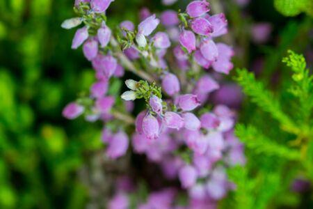 Little purple bell flowers on green background