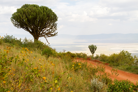 Ngorongoro Conservation Area (NCA) World Heritage Site in the Crater Highlands, Tanzania with wild animals and birds in the plains