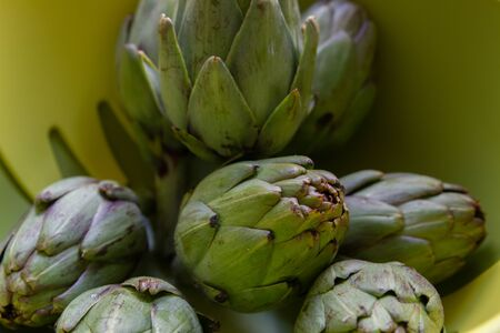 Raw green artichokes i nthe kitchen, ready to be cooked