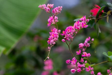 Branch of pink flowers with yellow stem over green tropical background