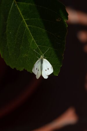 Close-up of white butterfly on green gif leaves over white background