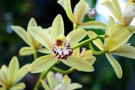 orchid Reklamní fotografie - 76627184