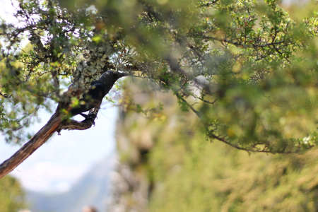 arboreal: bird at twig, tablemountain Stock Photo
