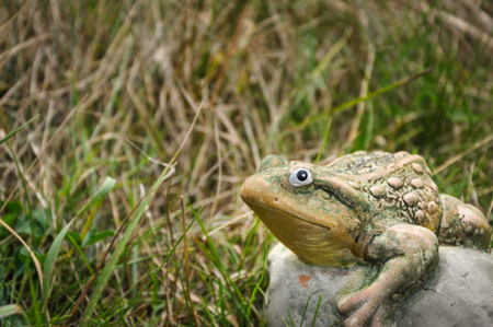 statute: Decorative ctone frog sitting in the grass and looking at camera