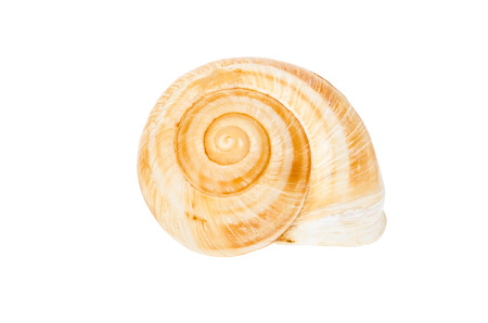 clam gardens: Beige spiral shell isolated on white background Stock Photo