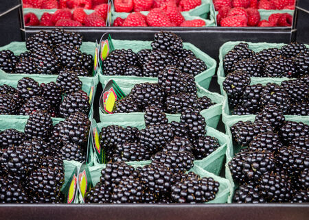 Fresh clean assorted blackberries for sale at a local farm market photo