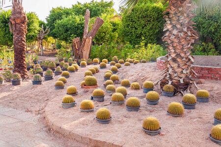 Cactus garden with multiple cactus plant in pots at summer Imagens