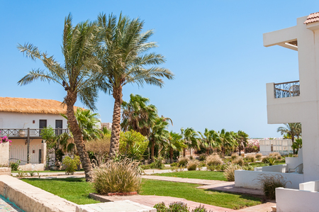 tropical garden: Palm trees and stone pathway in tropical garden villas at resort Stock Photo
