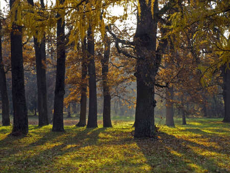 Autumn Park is lit up the sun  On the grass the long shadows of the trees