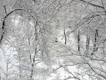 Winter Park  All in the snow  Branches of trees in frost  View from the top  Stock Photo