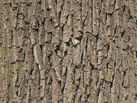 The bark of an old tree photographed in close-up as a backdrop
