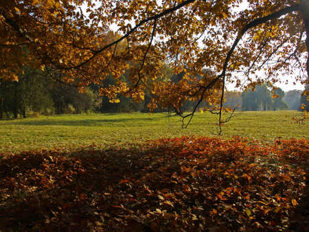 Autumn. In the foreground is a branch of oak tree with red leaves. Beneath it lies fallen leaves. Behind it is visible  glade in the sunlight.