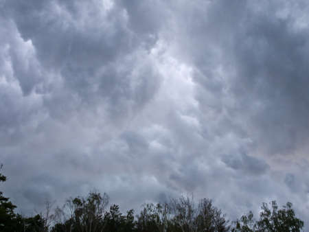 The sky before a thunderstorm. At the bottom of a thin strip of tree crowns.