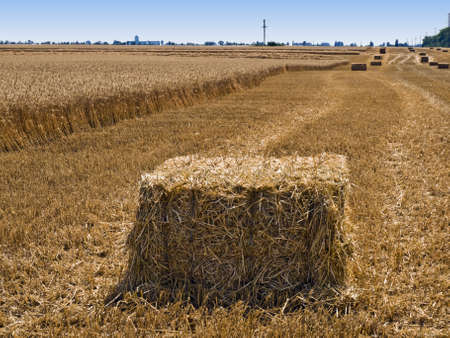 rural landscape with a partially ubranym field of wheat and bales of straw on stubble Stock Photo