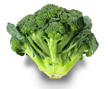 head of fresh broccoli. Isolation on a white background.