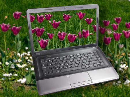 Notebook on the background of tulips  The display is an image of tulips  Nature and Technology  photo