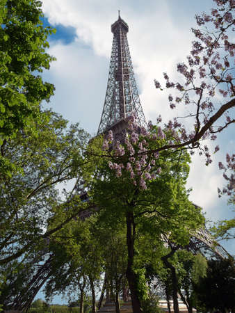 The Eiffel Tower in spring among blossoming trees. Paris, France. Stock Photo