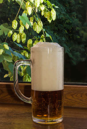 window sill: glass of beer and beer foam on a wooden window sill on the background branches with cones of hops Stock Photo