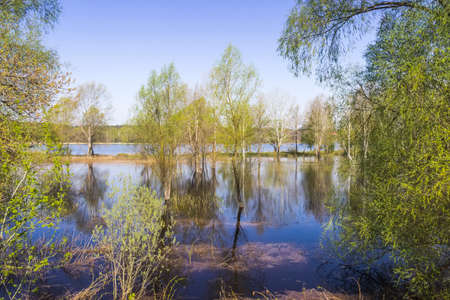 river bank: Trees standing in water on the river bank during the spring flood