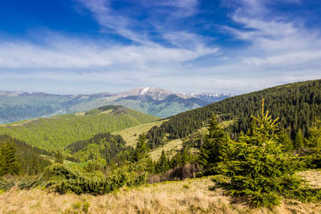 forested: Landscape with mountain ranges, forested slopes, mountain pasture, snowfields on top of the ridge and sky. Carpathians.