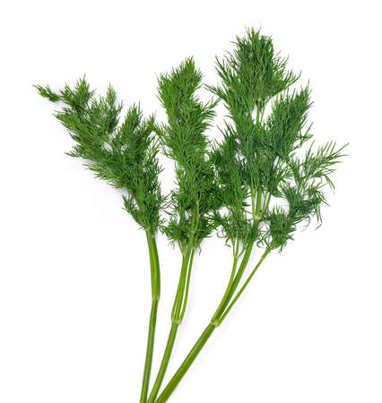 greenness: Three branches of fresh green dill on a light background. Isolation.