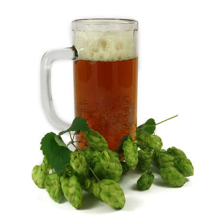 tipple: Mug with beer and branch of hop on a light background. Isolation.