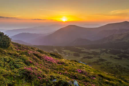 forested: Sunrise in the valley with forested slopes and meadow with flowers in the foreground. Carpathian Mountains. Stock Photo