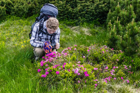 packsack: Young tourist takes pictures of flowers rhododendron Carpathian.
