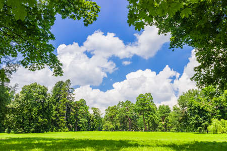 walk in the park: Large clearing in the park among the conifers and deciduous trees on the background of the sky with clouds Stock Photo