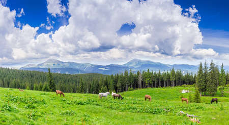 Mountain pasture with grazing horses against the backdrop of mountain range and sky with clouds. Carpathian Mountains.