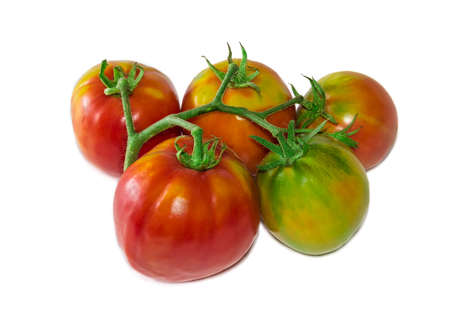 fascicule: Branch with a red, orange and green tomatoes on a light background. Isolation.