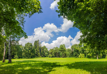 Large clearing in the park among the conifers and deciduous trees on the background of the sky with clouds Stock Photo