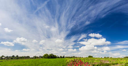 Sky with clouds on the background of field, flowers and trees in summer day photo