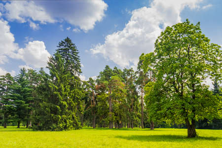 Large clearing in the park among the conifers and deciduous trees on the background of the sky with clouds Zdjęcie Seryjne