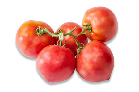 fascicule: Branch with a pink and orange tomatoes on a light background. Isolation.