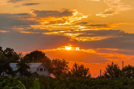 farmhouses: Sunset on the background of field trees and farmhouses