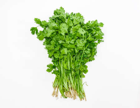 Bundle of fresh green coriander leaves with roots on a light background. Isolation. 스톡 콘텐츠