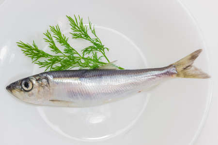 sprat: One raw sprat and a branch of a fresh dill on a white plate