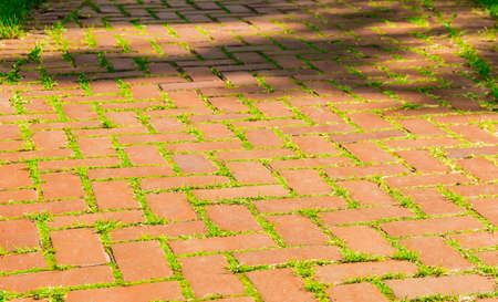 walkway: Old walkway made of red brick with sprouted grass and moss between the bricks