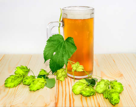 humulus lupulus: Mug with beer and branch of hops with leaves and strobiles on wooden surface.