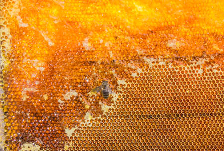 maltose: Honeycombs filled with honey and three bee closeup. Stock Photo
