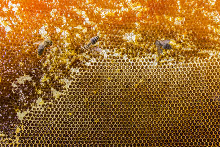 maltose: Honeycombs filled with honey and three bees closeup. Stock Photo